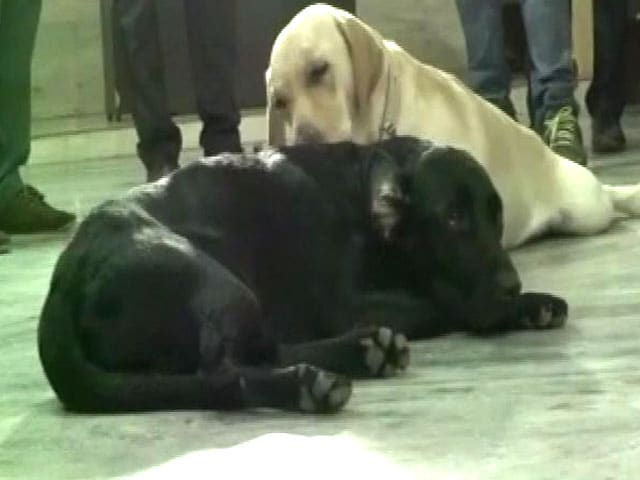 Video : After Azam Khan's Buffaloes, UP Cops Fret Over Lawmaker's Dog