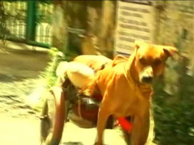 Video: A Kerala Man Makes Doggy Wheelchair For Paralysed Pooch