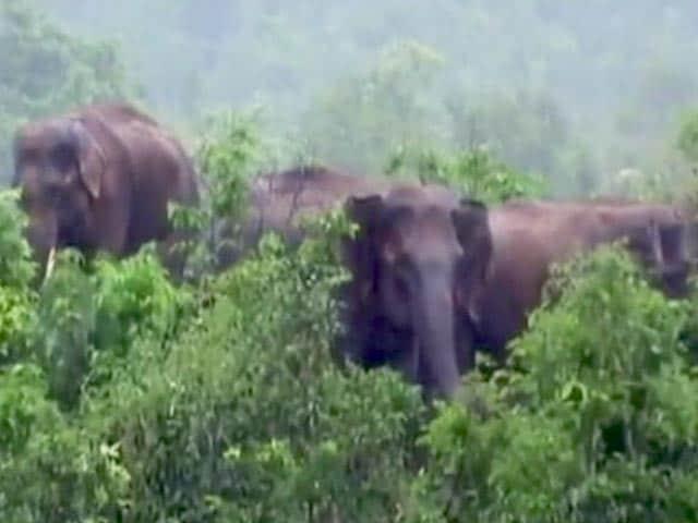 Videos : ओडिशा : बैतरनी नदी में आई बाढ़ के कारण फंसा हाथियों का झुंड