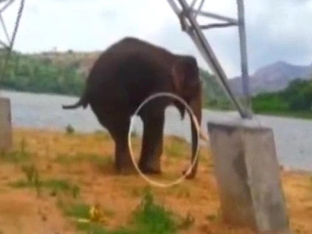 Video : Wildlife Lovers Call For Help For Injured Elephant Near Bengaluru