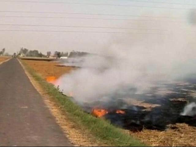 Video : Burning Of Paddy Stubble Continues In Punjab, Haryana Despite Curbs