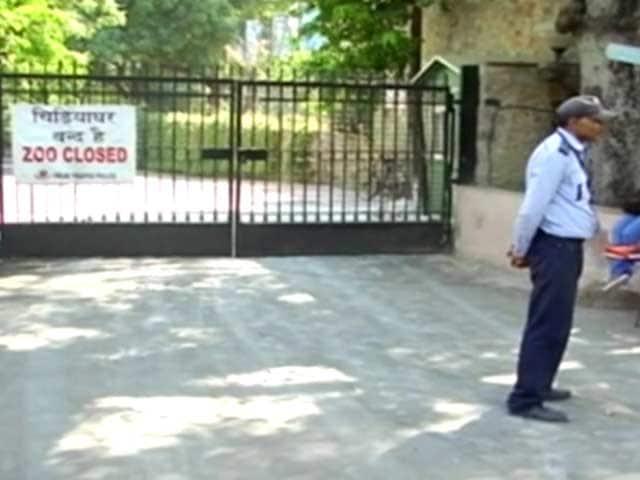 Video : Delhi Zoo, Deer Park Shut Down As Bird Flu Strikes