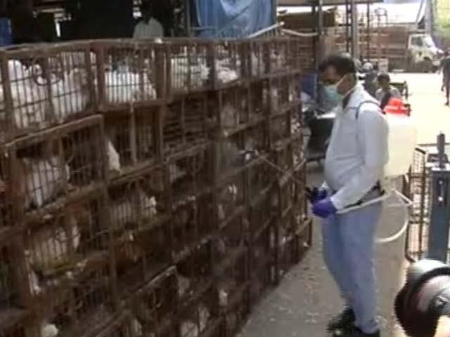 Videos : दिल्ली : बर्ड फ्लू से निपटने के लिए एडवाइजरी, कच्चा अंडा और अधपका मांस न खाने की सलाह