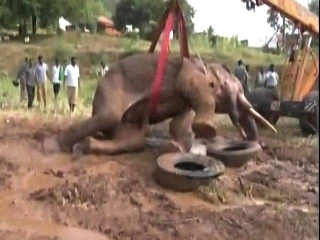 Video : Elephant Sidda, Rescued From Dam Near Bengaluru, Still Fighting For Survival