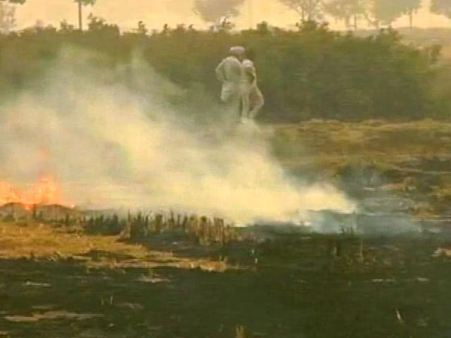 Video : 60% of Toxic Delhi Smog Result Of Punjab Crop Burning, Say Experts