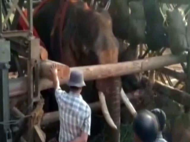 Videos : ज़िंदगी और मौत के बीच झूल रहे हाथी को बचाने आई सेना