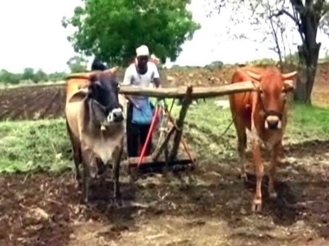 Videos : लातूर के किसान फिर बदहाल, सूखे और बाढ़ के बाद अब नोटबंदी