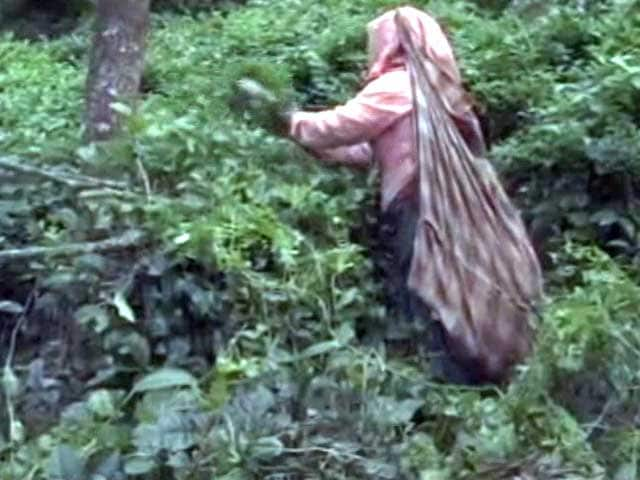 Video : After Days Of Unpaid Labour, Kerala Workers Out Of Ways To Stay Afloat