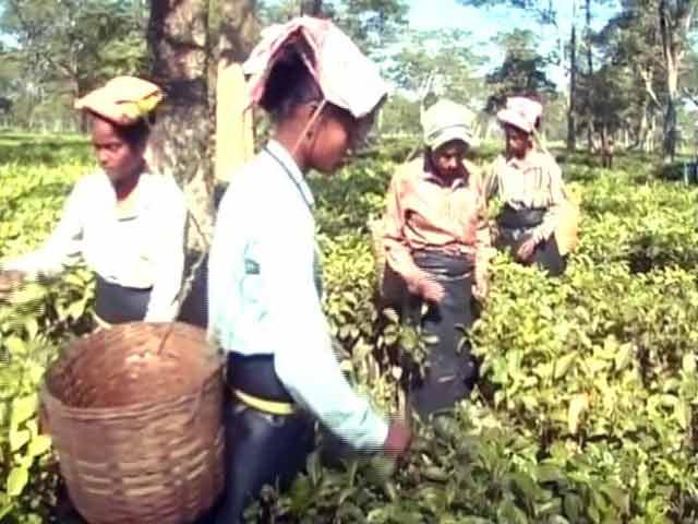 Video : असम के चाय बागानों के मजदूरों पर नोटबंदी का असर