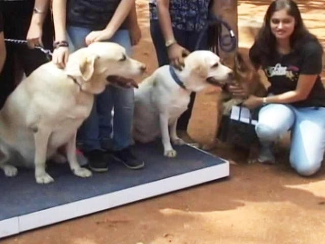 Video : A Walk For The Homeless Dogs In Bengaluru
