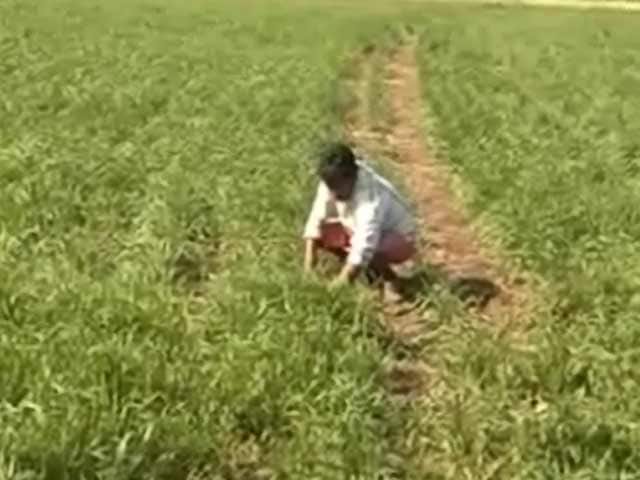 Video : सरकार ने गेहूं पर आयात शुल्क हटाया, किसान चिंतित