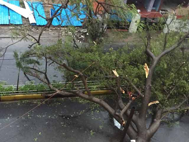 Video : Cars Wrecked, Tress Uprooted As Cyclone Vardah Strikes Near Chennai