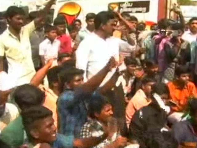 Video : Instead Of Pongal Cheer, Protests Engulf Rural Madurai Over Jallikattu Ban