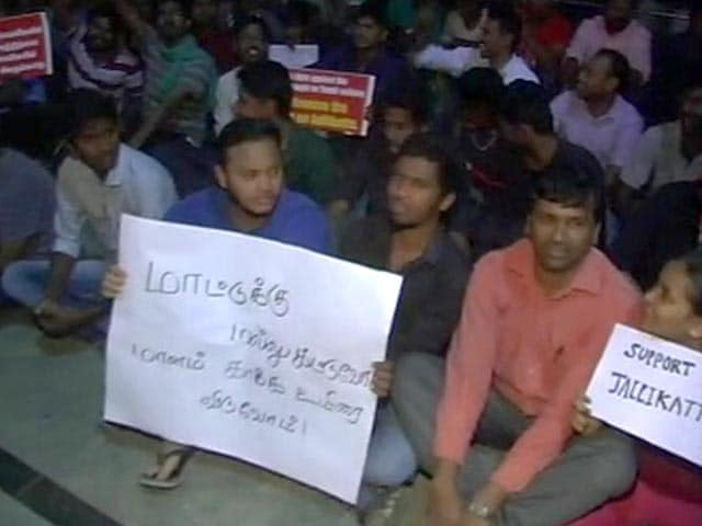 Video : Jallikattu: 5,000 Gather At Chennai's Marina Beach For Overnight Protests