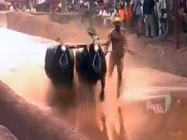 Video : After Jallikattu, Protests For Karnataka's Kambala Gain Steam