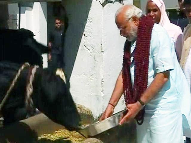 Videos : गढ़वा घाट आश्रम पहुंचे पीएम नरेंद्र मोदी, गाय को खिलाया चारा