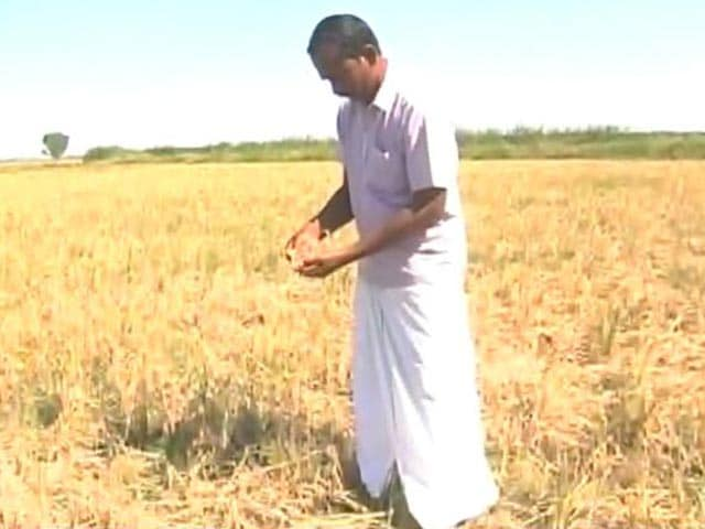Video : In Drought-Hit Tamil Nadu, Farmer Distress On A High