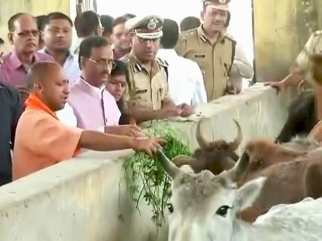 Videos : नेशनल रिपोर्टर : मुलायम के बेटे-बहू की गोशाला में पहुंचे CM योगी आदित्यनाथ