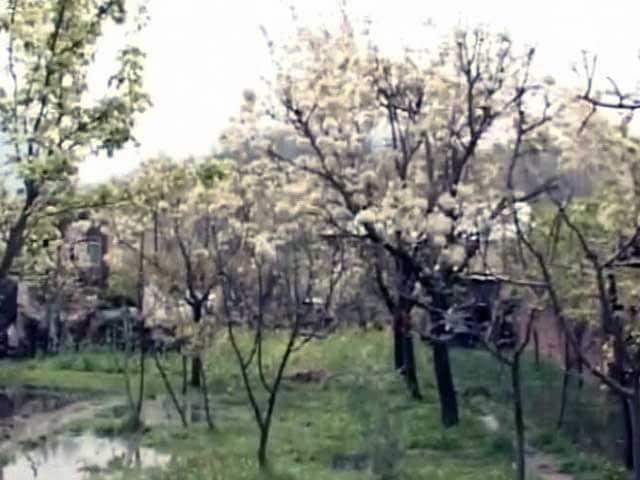 Videos : कश्मीर घाटी के फल किसानों पर बेमौसम बारिश की मार