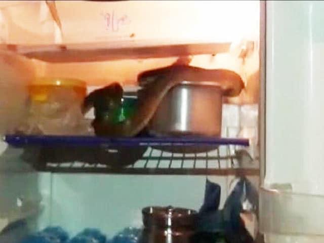 Video : Telangana Girl Opened Fridge. A King Cobra Inside