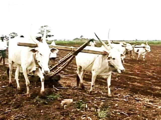 Videos : लातूर में पिता को आर्थिक बोझ से बचाने के लिए किसान की बेटी ने दी जान