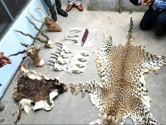 Video : नेशनल शूटर पर कसा शिकंजा, जंगली जानवर और हथियारों की तस्करी का आरोप