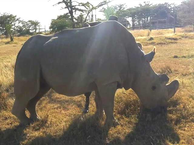Video : How Tinder Is Playing A Role In Trying To Save A Rhino From Extinction