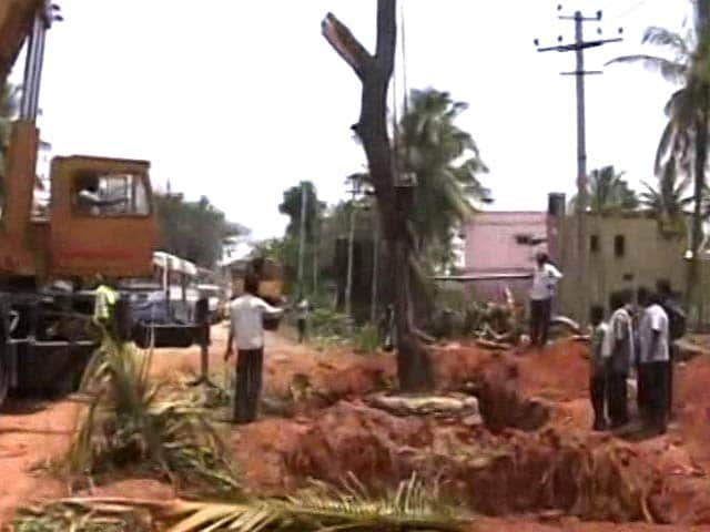 Video : Trees Were Being Uprooted In Garden City. Bengaluru Turned To Crowd Funding