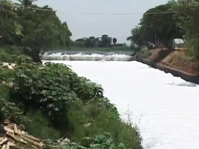 Video : Siddaramaiah Visits Bellandur Lake, Says Can't Meet Clean-Up Deadline