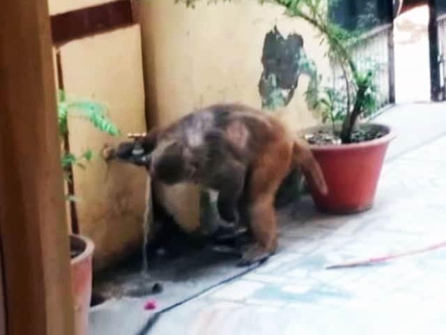 Video : गर्मी से इंसान ही नहीं जानवर भी हैं परेशान, अपना रहे हैं ये नुस्खे