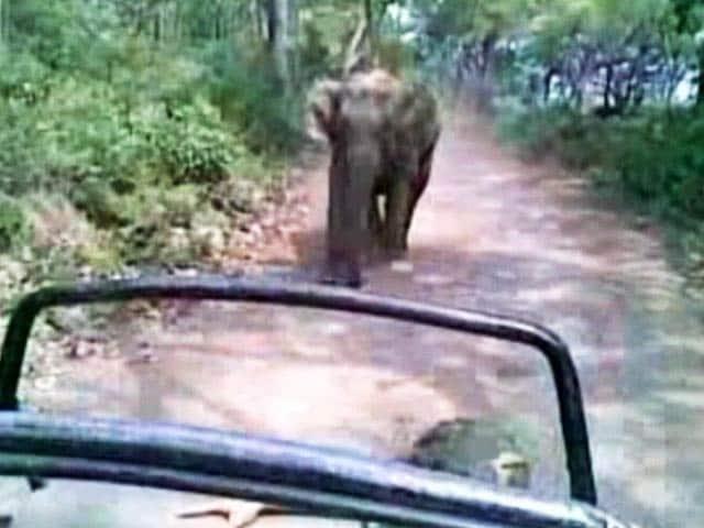 Videos : ...जब जिम कॉर्बेट नेशनल पार्क में सैलानियों के पीछे पड़ गया हाथी