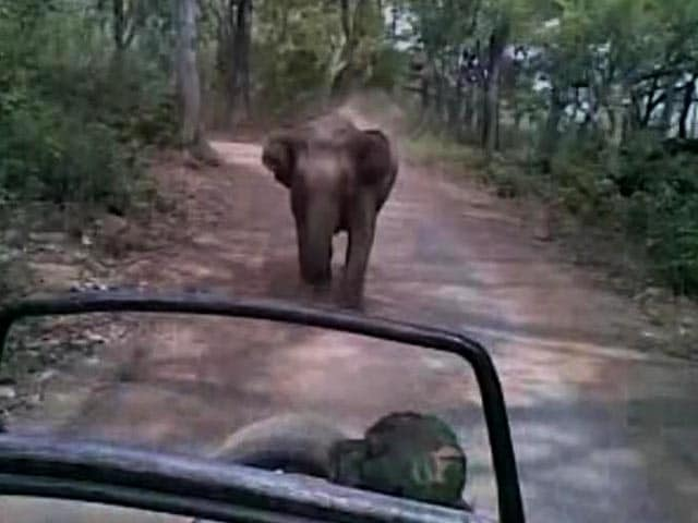 'Run, Run': Wild Elephant Chases Tourists In Jim Corbett
