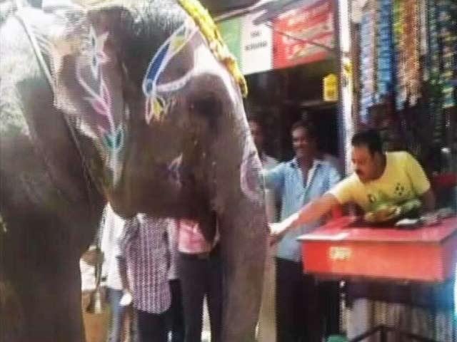 Video : पान खाने का शौकीन है यह हाथी