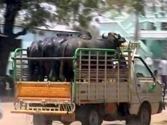Videos : MoJo: मवेशी की खरीद-फरोख्त के नए नियम पर मद्रास हाईकोर्ट ने लगाई रोक