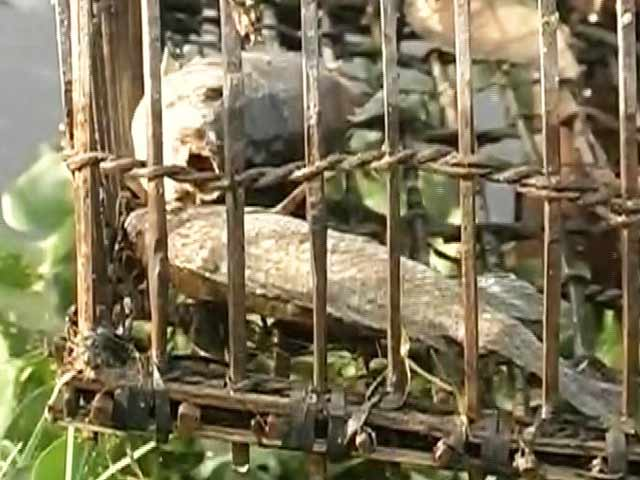 Video : Hyderabad Lakes Throw Up Dead Fish, Thousands And Thousands Of Them