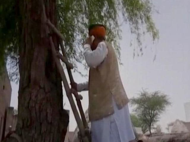 Video : Minister Climbs Tree In Rajasthan. He Had To Make A Call