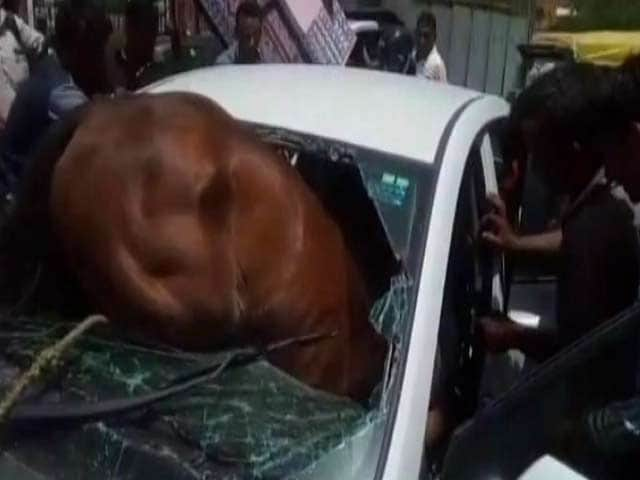 Video : Honking, Heat Unsettle Horse Who Smashes Through Car's Windshield