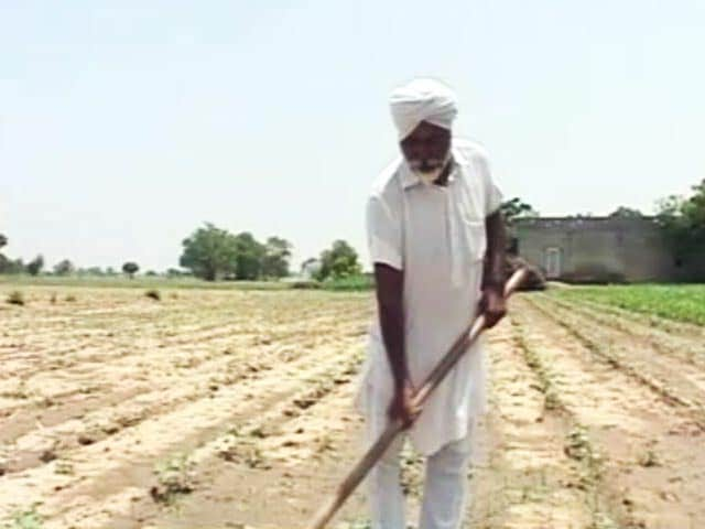 Video : Punjab Cotton Farmers' Dilemma: Despite More Crop Yield, Profit Is Meagre