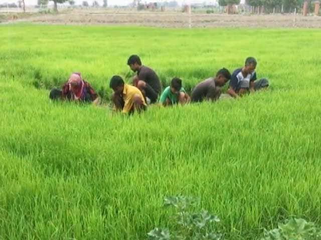 Video : महाराष्ट्र में किसानों के 1.5 लाख रुपये तक के कर्ज हुए माफ