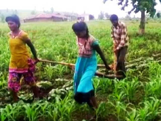 Video : Help Reaches Madhya Pradesh Farmer Who Used Daughters To Pull Plough