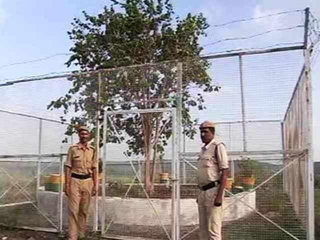 Video : मध्य प्रदेश :  VVIP पेड़ पर हर महीने ख़र्च होते हैं लाखों रुपये