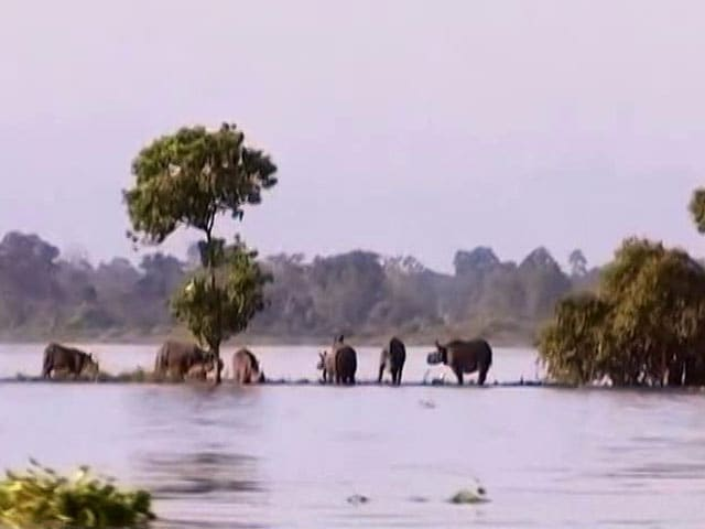 Video : Assam Floods: Highlands Drowning But A Half-Kept Promise Is All Kaziranga Animals Have