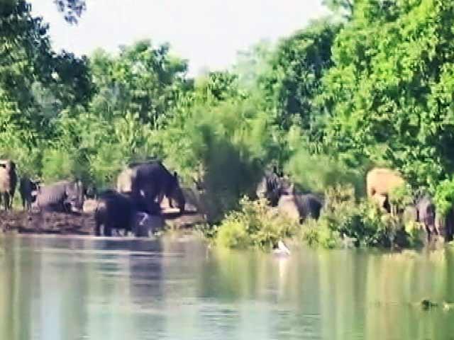 Video : बाढ़ में डूबा काजीरंगा नेशनल पार्क का अधिकांश हिस्सा