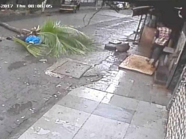 Videos : मुंबई में महिला के ऊपर गिरा नारियल का पेड़,मौत