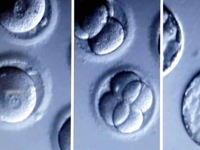 Video : Designer Baby Next? US Scientists Modify Genes Of Human Embryo