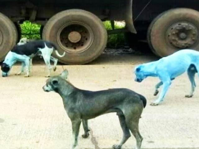Videos : सोशल मीडिया में वायरल हो रहा है नीला कुत्ता