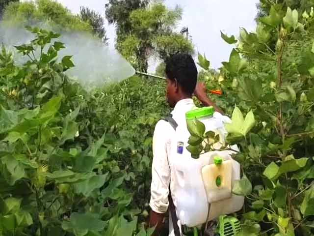Video : 'Don't Have Money To Buy Protection Kits': Farmers On Pesticide Poisoning