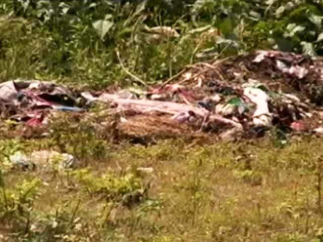 Video : कौन खा गया सांची के पेड़?