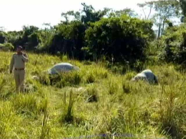 Video : Rhino, Calf Shot Dead In Kaziranga National Park In Assam