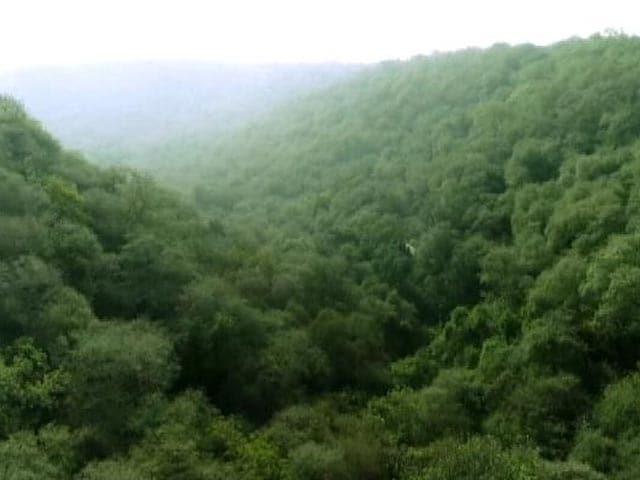 Video : प्राइम टाइम : फिर से अरावली में बस रहे हैं जंगल, लेकिन अतिक्रमण रोकना जरूरी